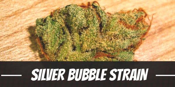 Silver Bubble Strain