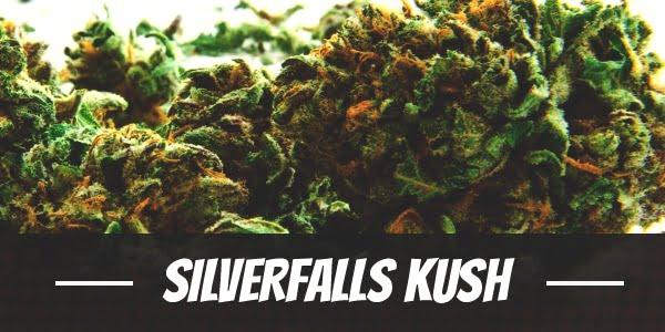 Silverfalls Kush