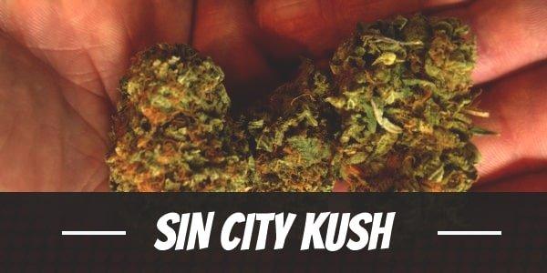Sin City Kush