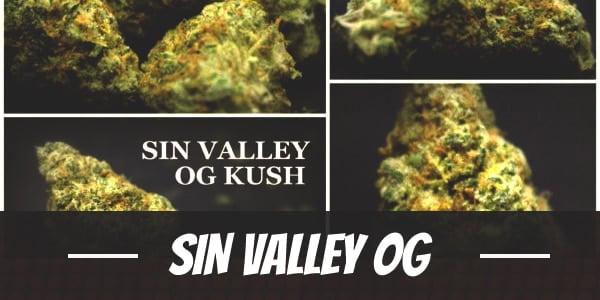 Sin Valley OG
