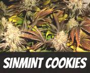 SinMint Cookies Strain