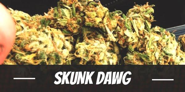 Skunk Dawg