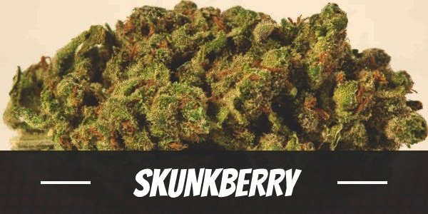 Skunkberry Strain