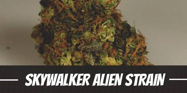Skywalker Alien Strain
