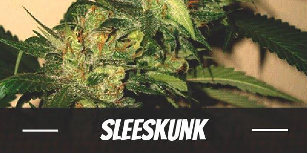 SleeSkunk