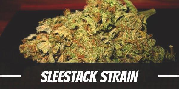 SleeStack Strain