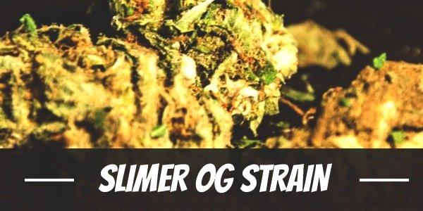 Slimer OG Strain