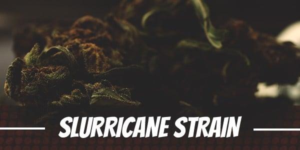 Slurricane-Cannabis-Strain