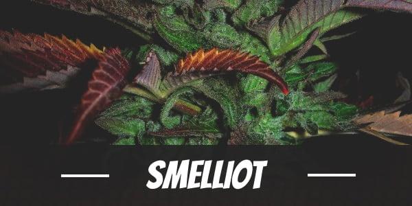 Smelliot