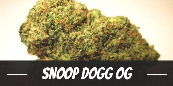 Snoop Dogg OG