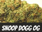Snoop Dogg OG Strain