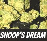 Snoop's Dream Strain
