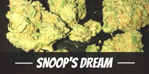 Snoop's Dream