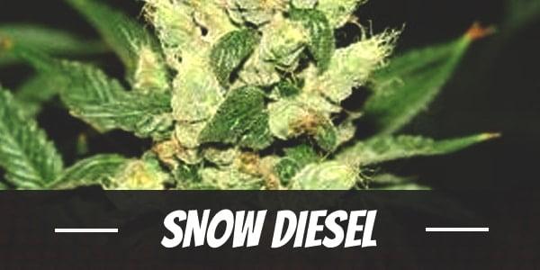 Snow Diesel