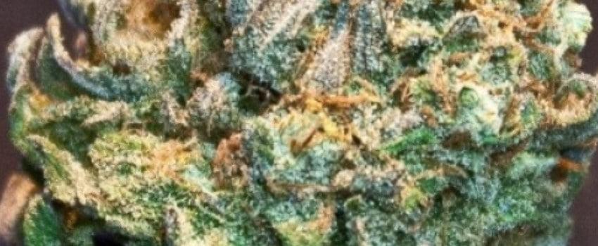 Snow Lotus Medical