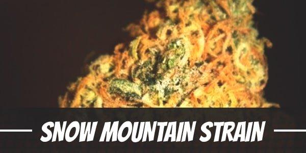 Snow Mountain Strain