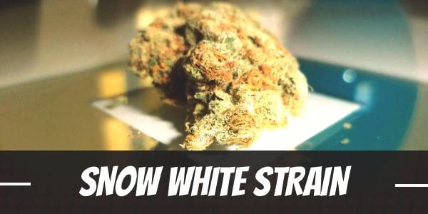 Snow White Strain