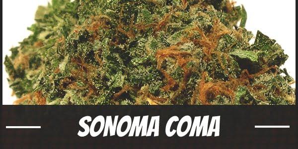 Sonoma Coma