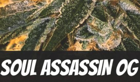Soul Assassin OG