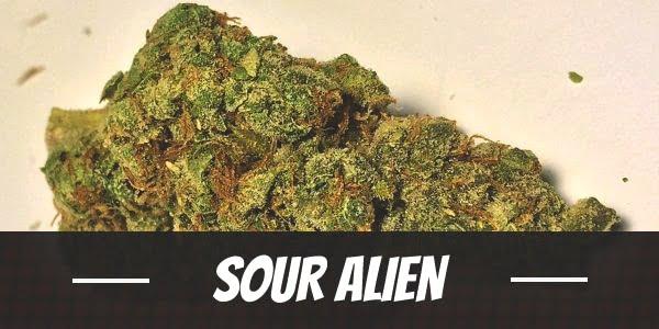 Sour Alien