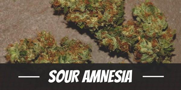 Sour Amnesia