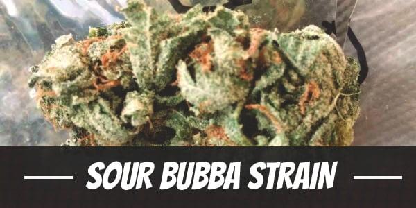 Sour Bubba Strain
