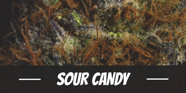 Sour Candy Strain