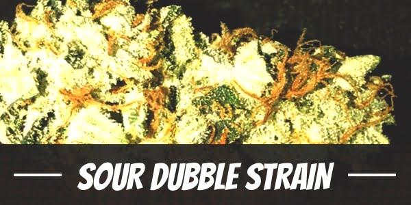 Sour Dubble Strain