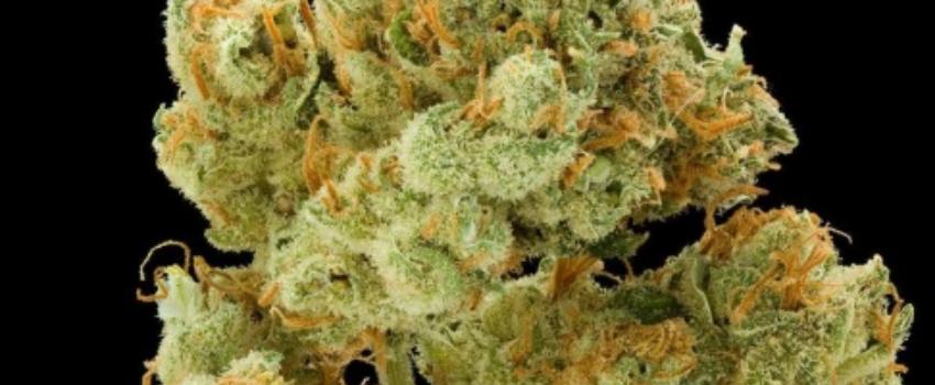 Sour Flower Medical