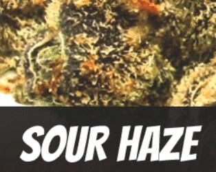 Sour Haze Strain