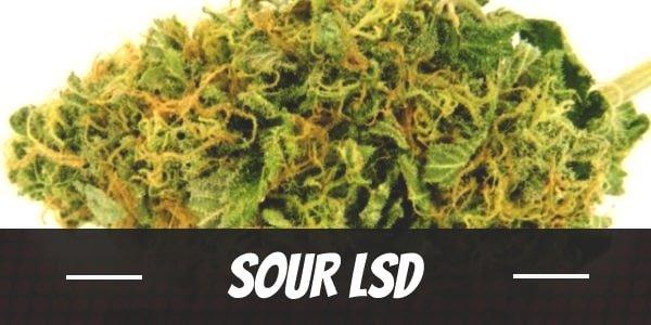 Sour LSD