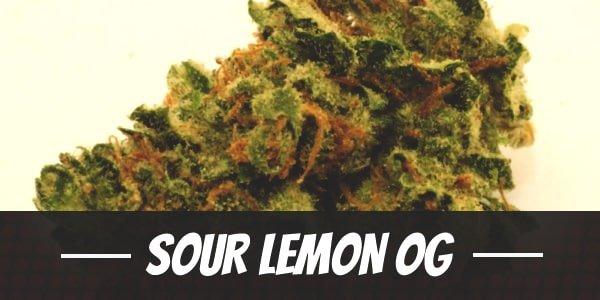Sour Lemon OG