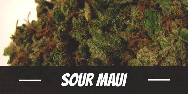 Sour Maui