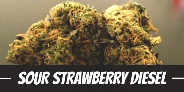 Sour Strawberry Diesel
