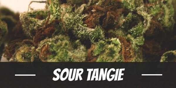 Sour Tangie