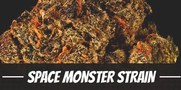 Space Monster Strain