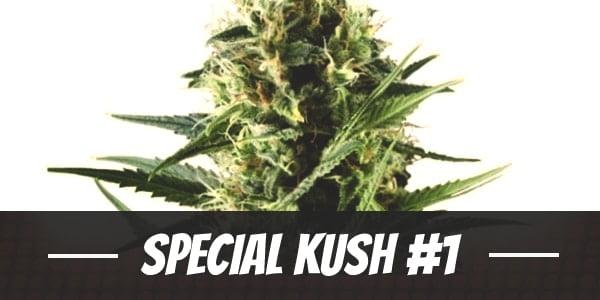 Special Kush #1