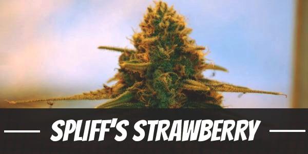 Spliff's Strawberry