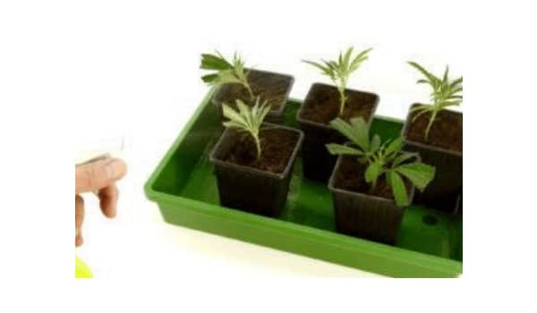 Spray the plants with water