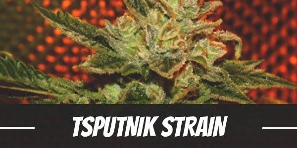 Sputnik Strain