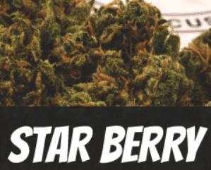 Star Berry Strain