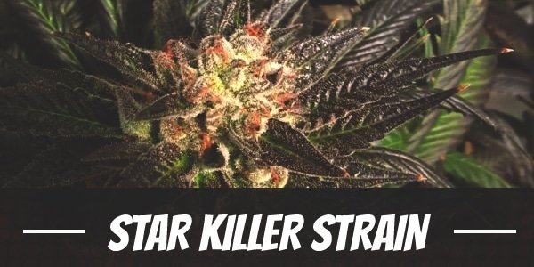 Star Killer Strain