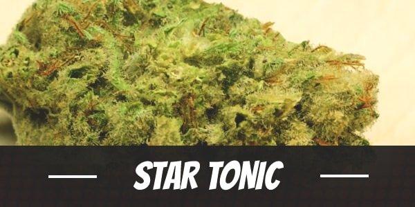 Star Tonic