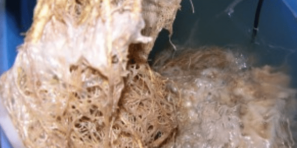 how-to-Stop-root-rot
