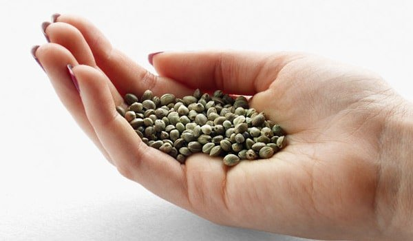 Storing Cannabis Seeds