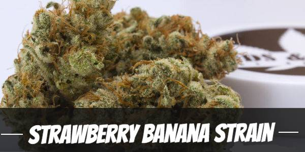 Strawberry Banana Strain