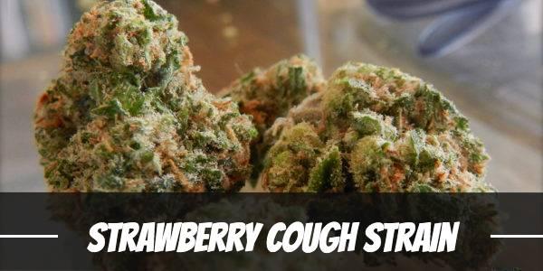 Strawberry Cough Strain