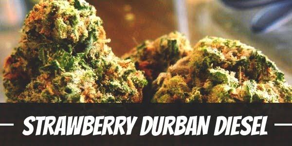 Strawberry Durban Diesel