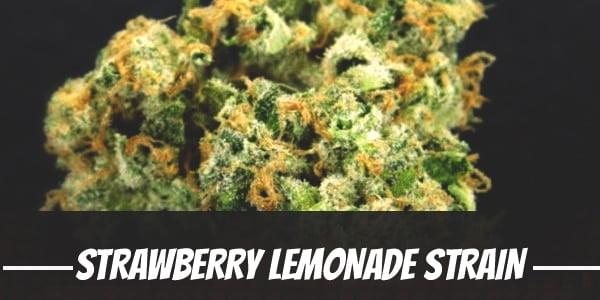 Strawberry Lemonade Strain
