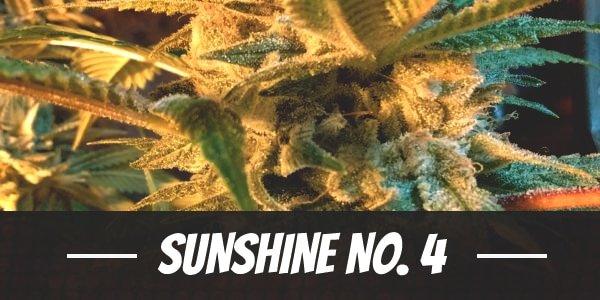 Sunshine No. 4